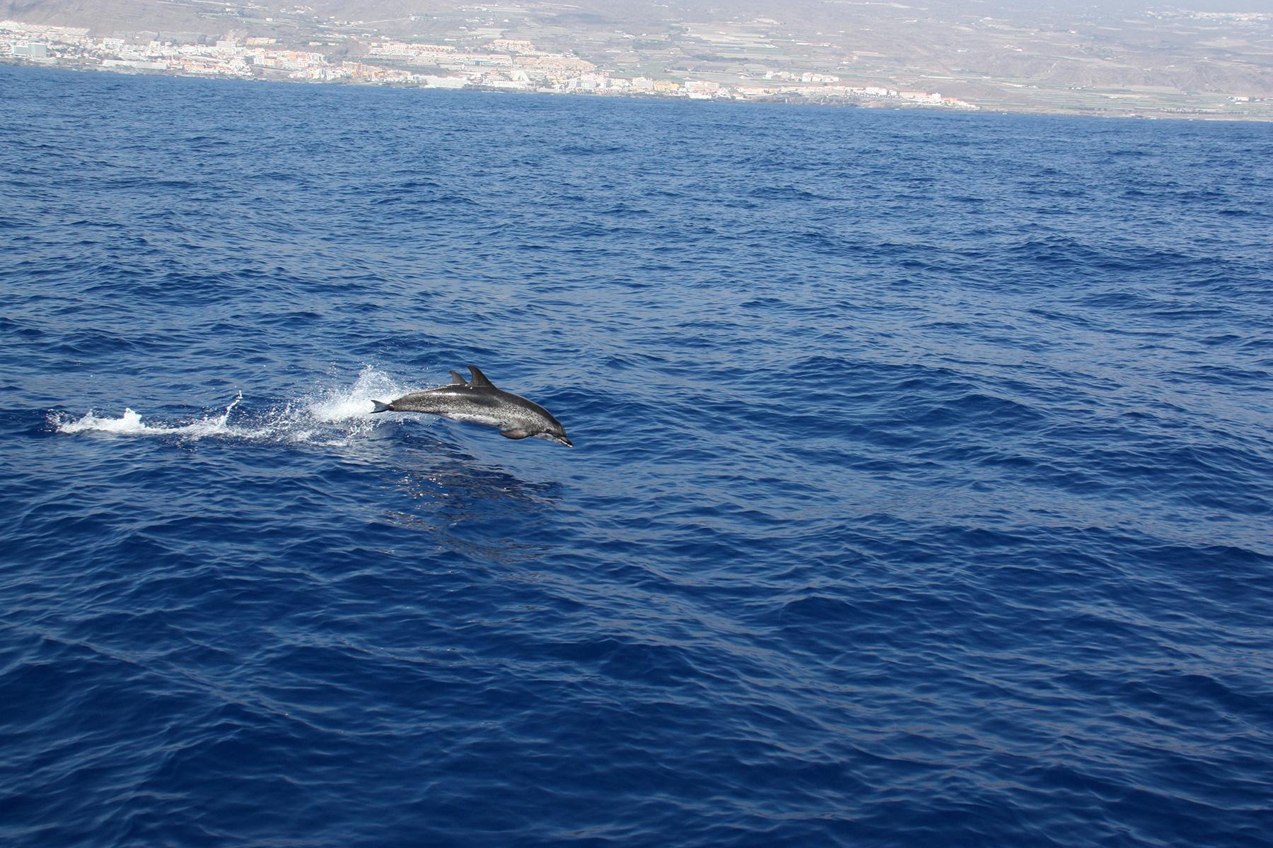 2 semaines de juin puerto de la cruz t n rife for Koi qui saute hors de l eau