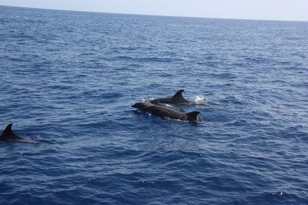 Un groupe de dauphins qui nous suit