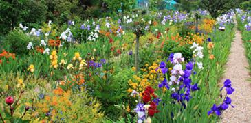 Promenade dans les jardins de Giverny