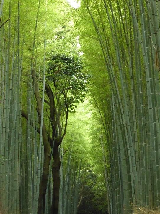 bambouseraie-darashiyama